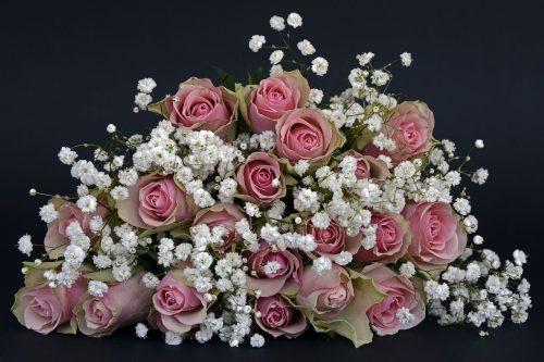 roses, rose flower, flowers