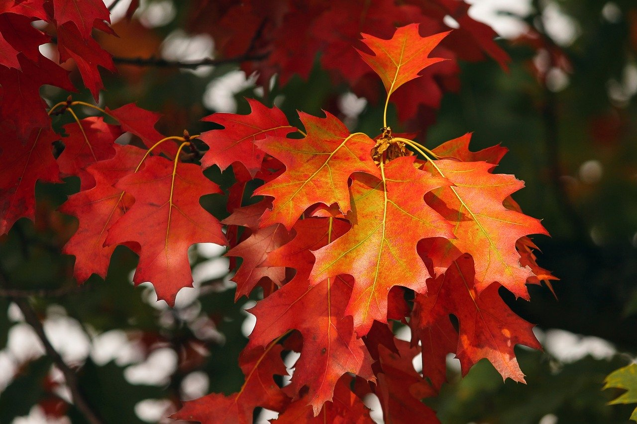 fall foliage, leaves, colorful